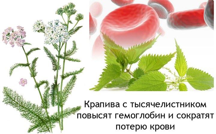 Травы при кровотечении