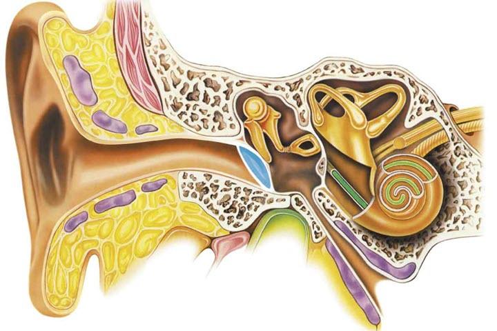 Схема воспаления слухового нерва