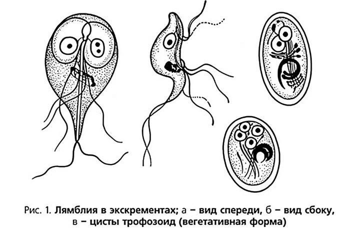 таблетки от паразитов в организме отзывы