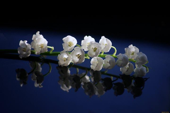Ароматные цветки ландыша