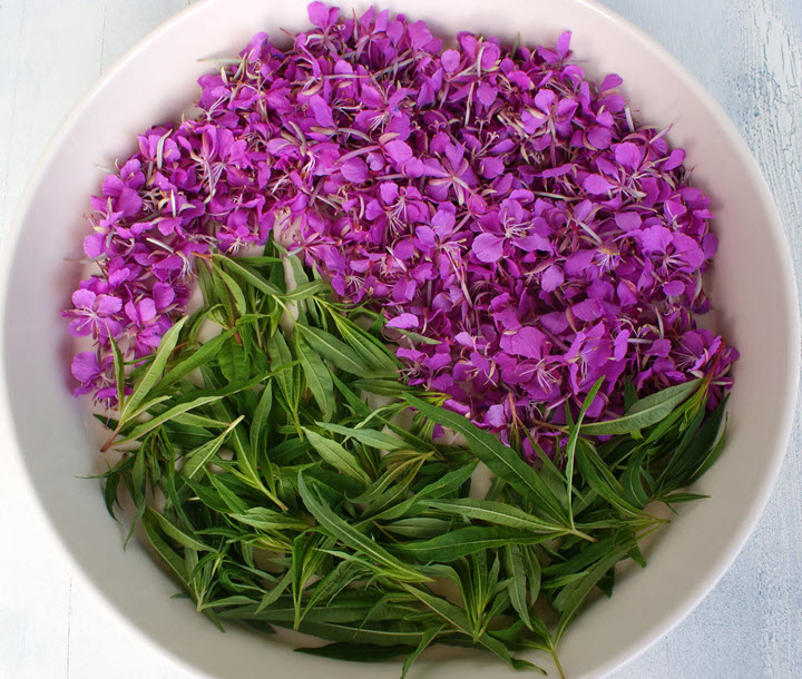 Известное лекарственное растение - иван-чай