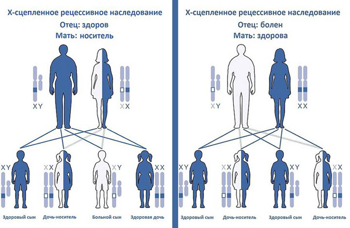Как передается гемофилия