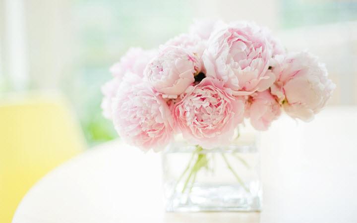 Пион - лекарственное растение и декоративный цветок