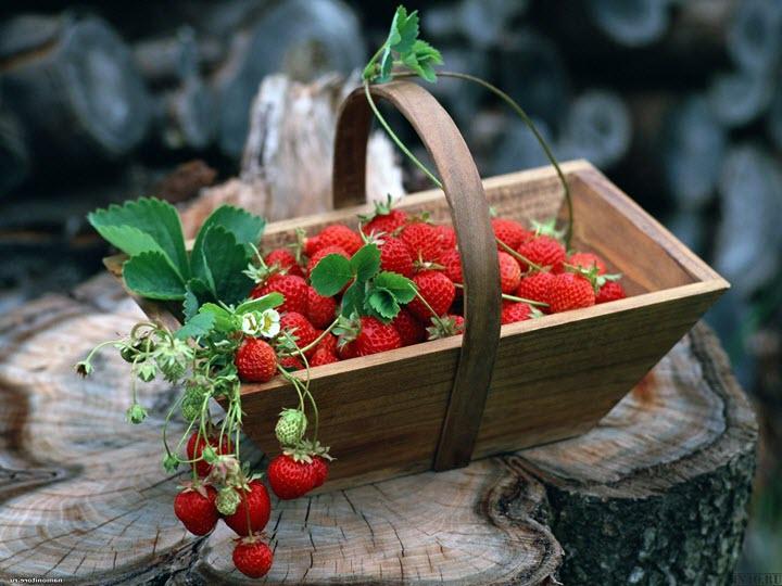 Земляника - вкусная и полезная ягода