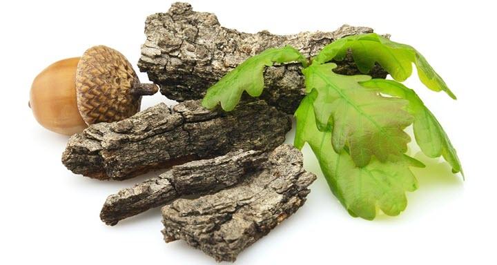 Дуб - полезное лекарственное растение