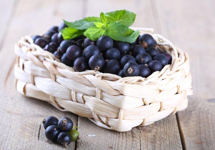 Черная смородина - очень полезное растение