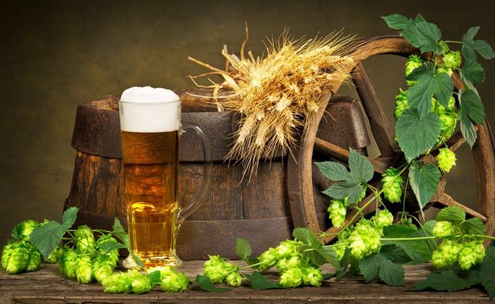 Из хмеля варят пиво