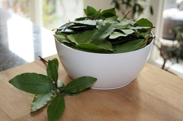 Лавровый лист широко используется в кулинарии
