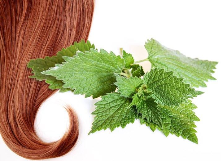 Крапивный отвар для волос