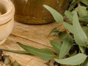 Листья эвкалипта для приготовления отвара