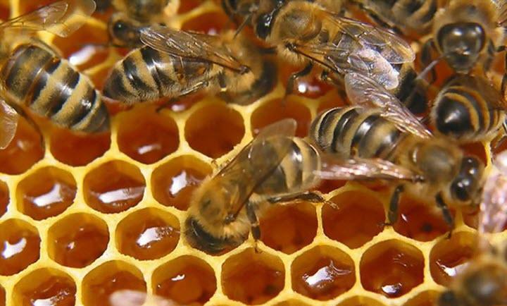 Пчелиный мед в сотах