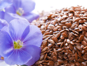 Цветы и семена льна